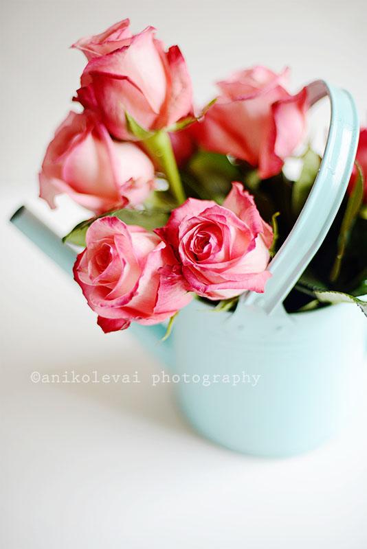 Roses  Aniko Levai Photography