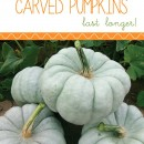 How to Make Pumpkins Last Longer by U Create