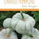 How to Make Pumpkins Last Longer by U Create